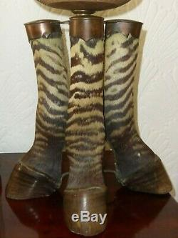 Rare Victorian Taxidermy Zebra Oil / Electric Lamp Rowland Ward Game Trophy